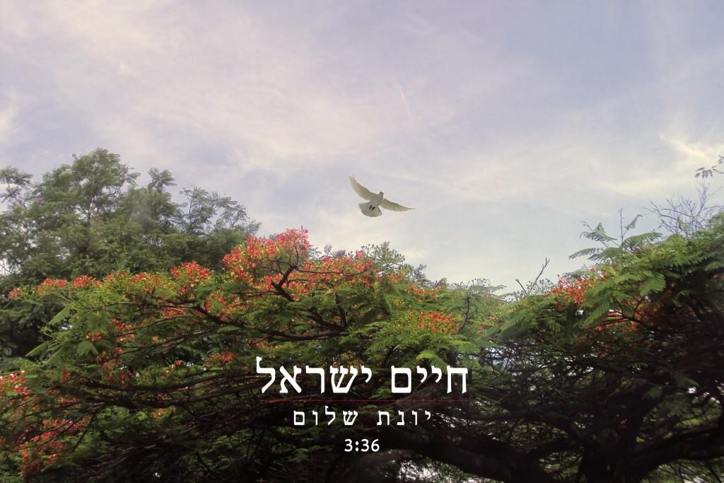 יונת שלום - חיים ישראל שר שמואל יונה 4